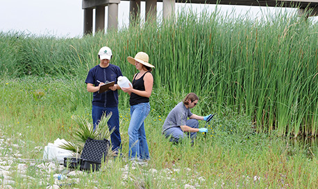 students-doing-research-in-wetlands