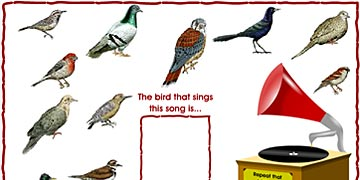 Birds Matching Songs