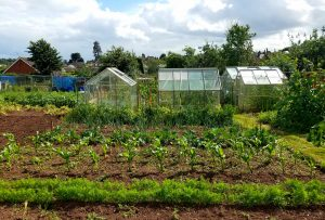 Applied Sustainability Research: Exeter Allotments
