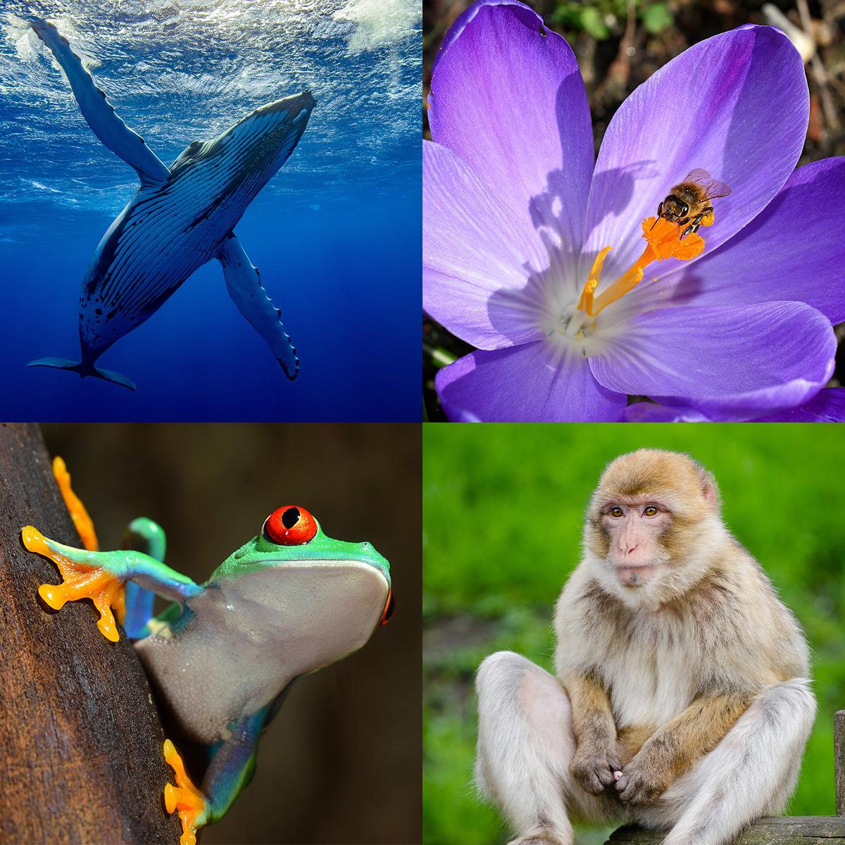 what-is-biodiversity