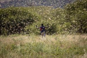 A man walks through a locust swarm in Kenya