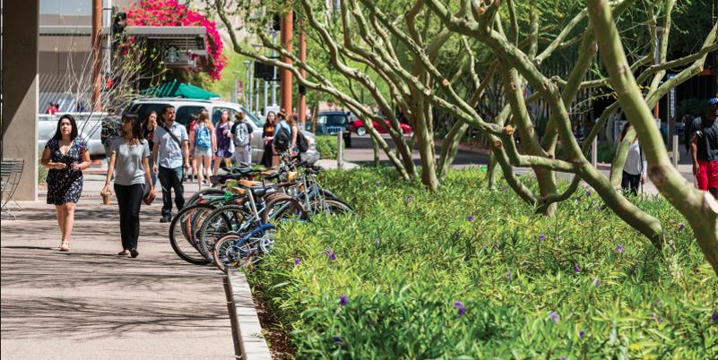 ASU students walking beneath tree-shaded area