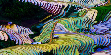 Making Rice Sustainable
