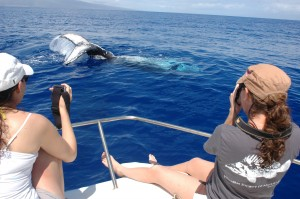 Lear Gerber and Yaiyr Astudillo-Scalia  get close to whales